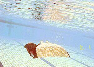 ニューウィングフィンでアプニア