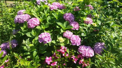 サボテンの植え替え 《2回目》 と 公園の花