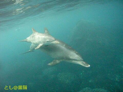 DOS(Dolphin Ocean Swim)