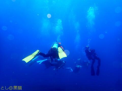 伊豆大島 1泊2日 6ビーチダイビングのウミウシとか生物