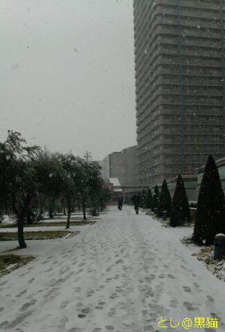 横浜は、朝のうち、雪!
