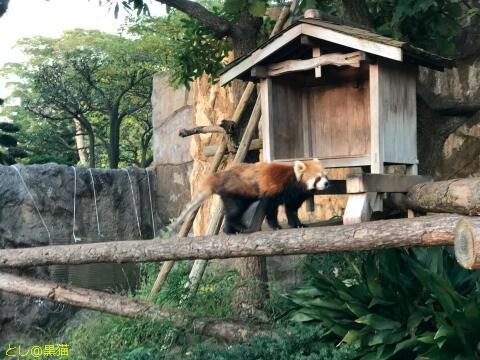 野毛山動物園で ヒトカゲ集めにGO