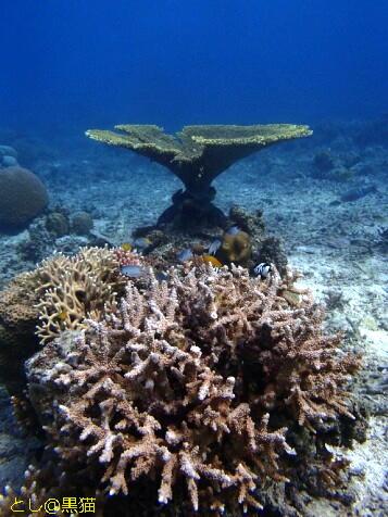石垣島 2日目 トロピカルな珊瑚礁の海!