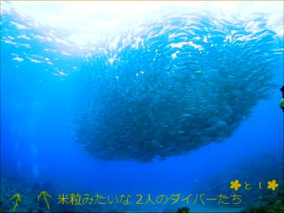 ギンガメアジとダイバーの大きさの対比
